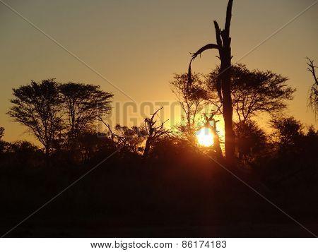 African Sundown Scenery
