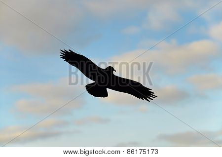 Silhouette of a bird of prey