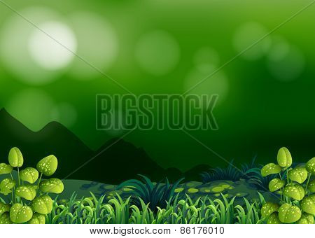 Forest background with lawn and bushes