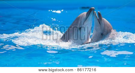 pair of dolphins dancing in water