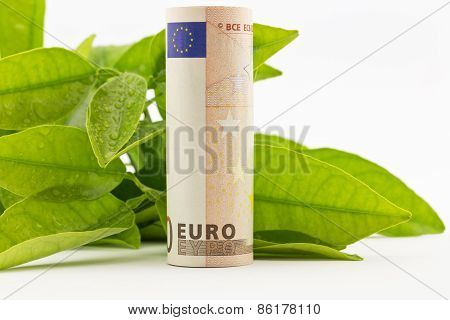Euro With Green Leaves