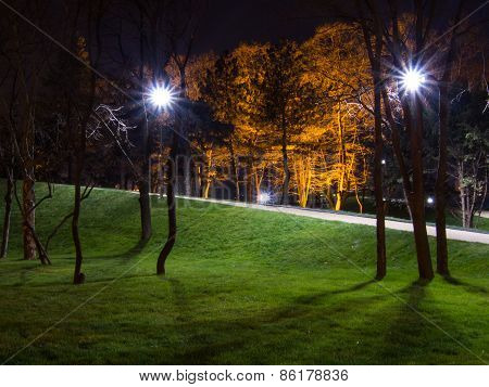 night in the park with bulb lights