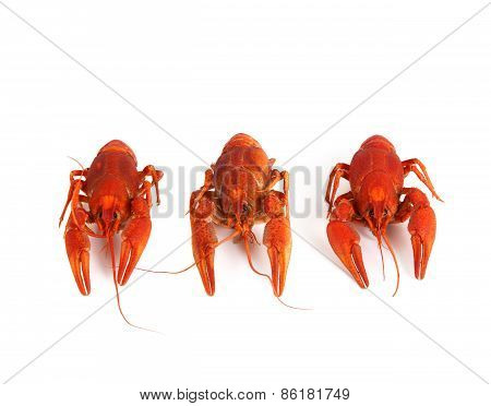 Three Boiled Crawfish