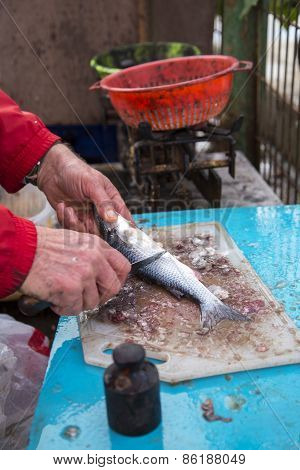 Closeup to fisherman hands cleaning the fresh sea bass fish on a piece of wood
