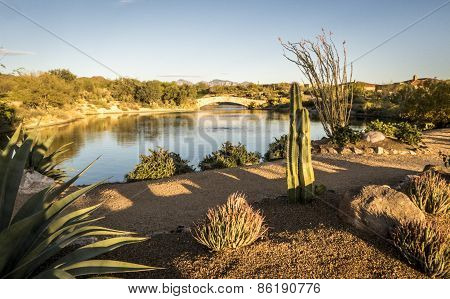 Desert Landscape in Tucson, Arizona
