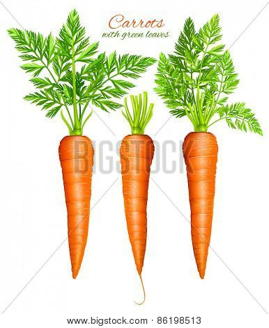 Carrots with leaves. Vector illustration.