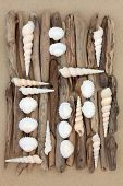picture of driftwood  - Shell and driftwood abstract collage on beach sand background - JPG