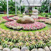 picture of bromeliad  - Beautiful colorful foliage on bromeliad plant bromeliad garden - JPG