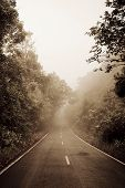 picture of smog  - Road through the forest  - JPG
