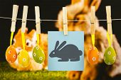picture of bunny rabbit  - easter bunny against ginger bunny rabbit - JPG