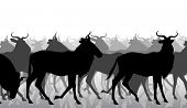 pic of wildebeest  - EPS8 editable vector cutout illustration of a herd of adult wildebeest - JPG