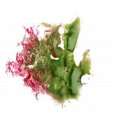 picture of insulting  - Abstract green - JPG
