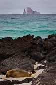 foto of sea lion  - Closeup portrait of sea lions relaxing in a beach with kicker rock in the background - JPG
