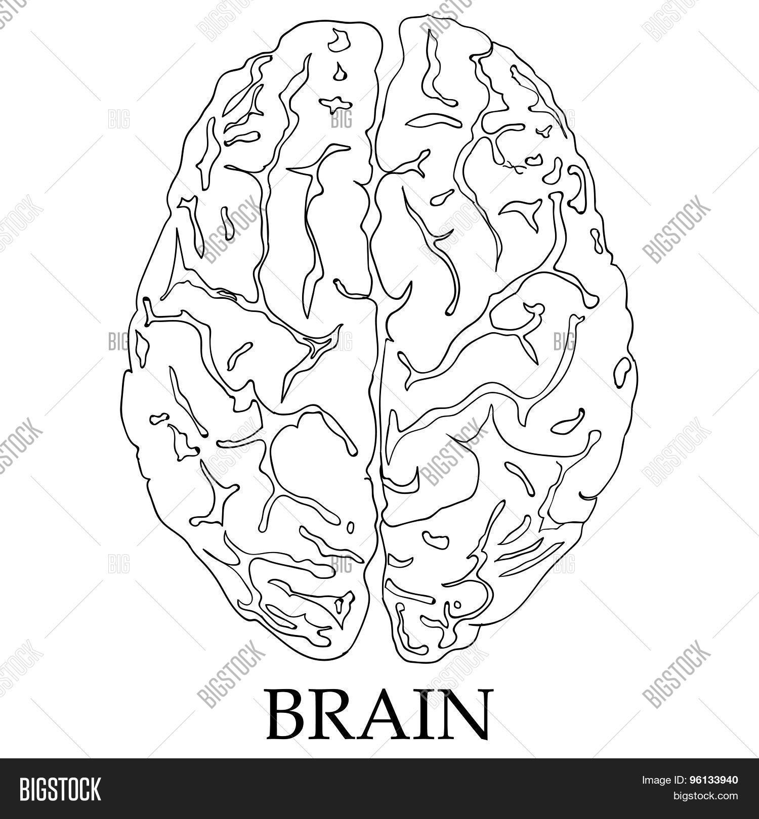 minimal style brain icon illustration stock vector  u0026 stock