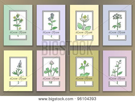 Set Vintage Posters with hand drawn watercolour herbs
