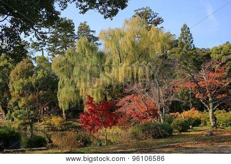 Garden Of Daikaku-ji, Kyoto