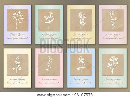 Set Vintage Posters with hand drawn herbs