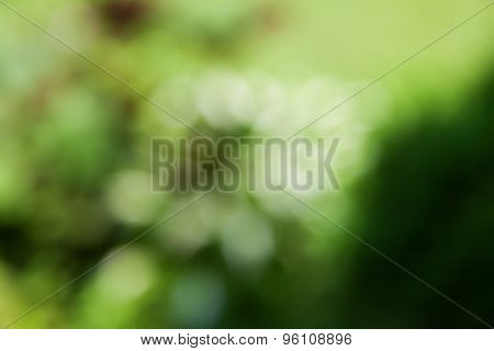 abstract natural green background. boke