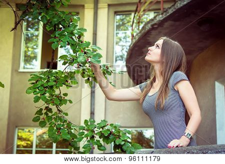 Woman picking mulberry
