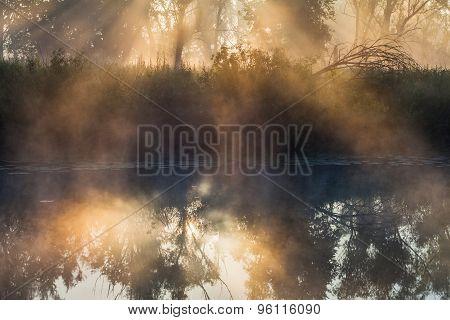 Summer Landscape Dense Fog In The Oak Grove