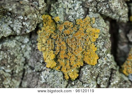 Close up of rock with fungus.
