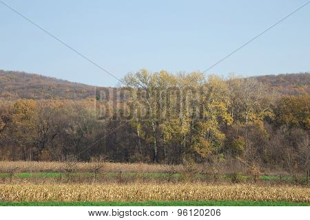 Autumn forest with blue sky.
