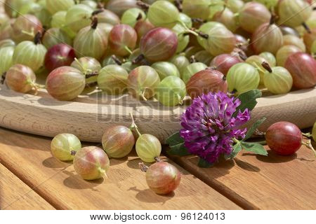 Gooseberries On Wooden Backgrouned And Clover