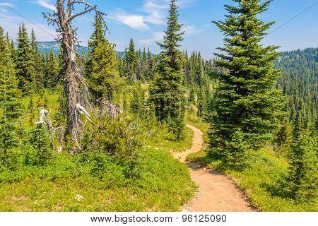 Beautiful Mountain Trail. Blackwall Peak Trail at Manning Park in British Columbia. Canada.