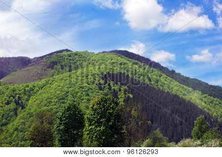 Landscape Of A Big Green Mountain With Green Trees