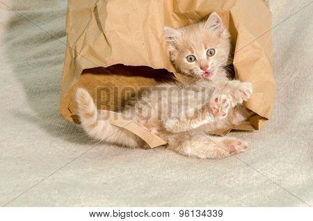 Cat Lying In A Brown Paper Bag