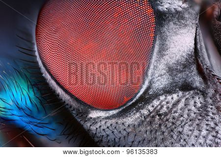 Extreme sharp and detailed fly compound eye surface taken at extreme magnification