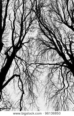 Abstract Dead Trees