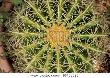 Cactus Beauty With The Nature