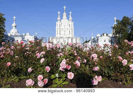 Flowers on the background of the Smolny Cathedral. Saint Petersburg.