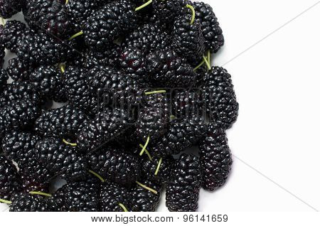 The Fruit Of Mulberry