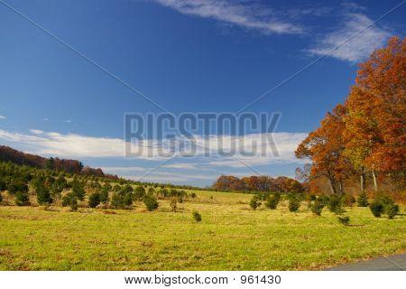 Campo de otoño