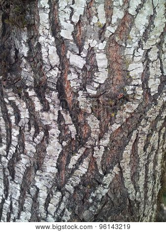 Striped Tree Bark