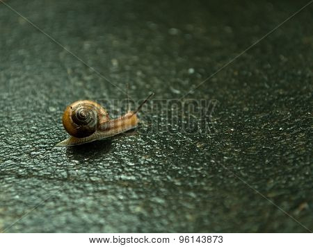 Little Snail On Road