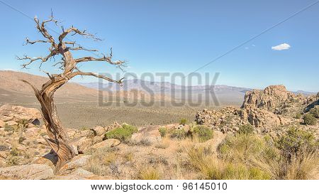 Tree Snag, Teutonia Peak Trail, Mojave National Preserve, CA