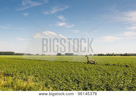 Irrigation Of A Potato Field In Summer Heat