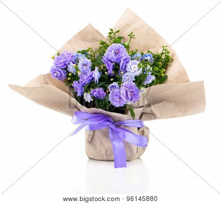 Blue Campanula Terry Flowers