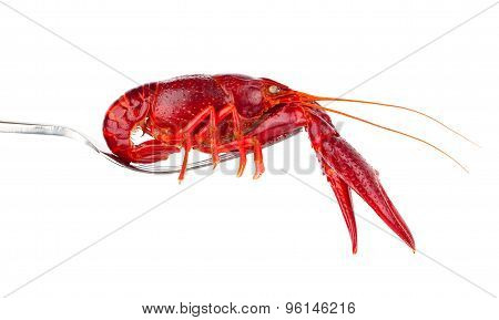 Crawfish On Fork