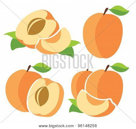 Vector Apricots