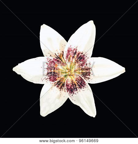 Cream Lily Flower Isolated on Black Background. Vector.