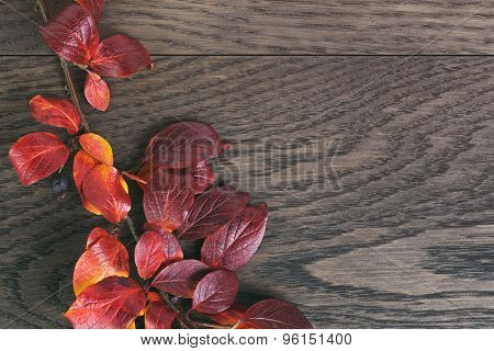 vintage toned photo of autumn leaves over wood table