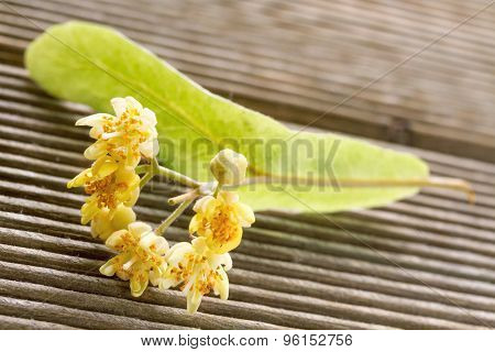 linden flowers on a wooden background