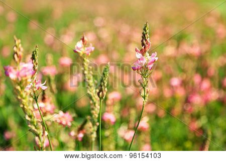 Beautiful wild flowers in the field