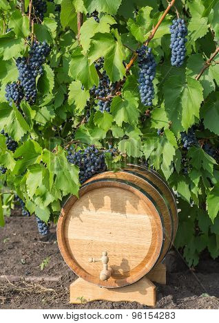 image of grapes on a barrel