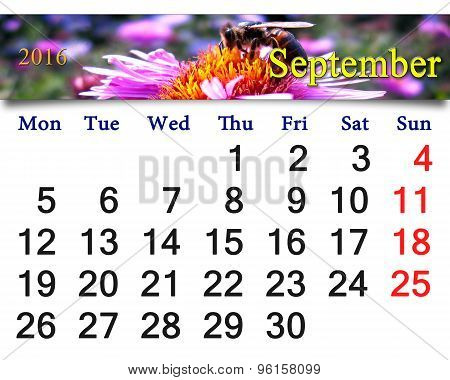 Calendar For September 2016 With Bee On Pink Asters