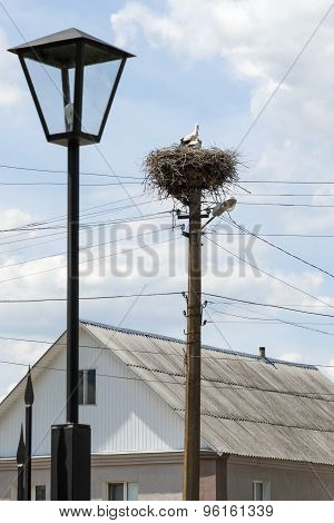 Stork With Children In The Nest On A Pole